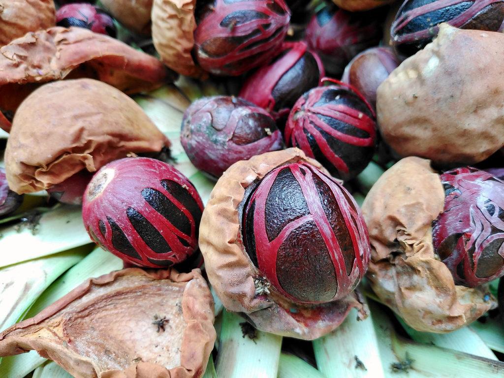 Noix de muscade, Bandaneira, Indonésie, Moluques, épices