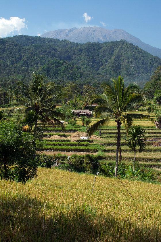 Rizières dans la région du Gunung Agung