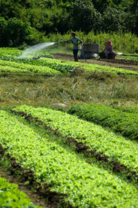 Jardins dans les environs de Kampot