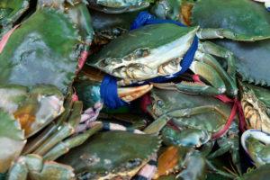 Sur le marché aux crabes de Kep