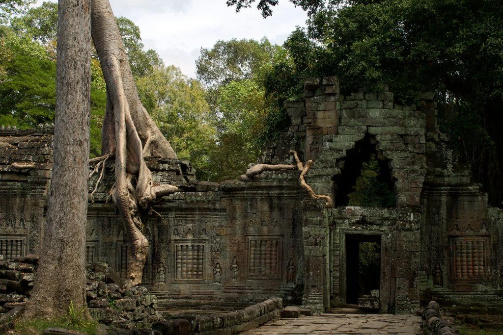 Fromager dans le Preah Khan