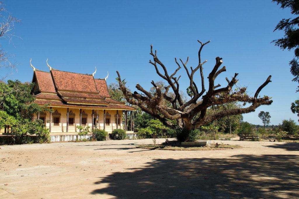 Le temple et l'arbre de Sambor