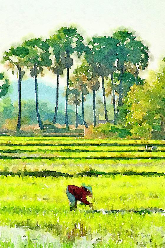 Aquarelle d'une scène de repiquage de riz